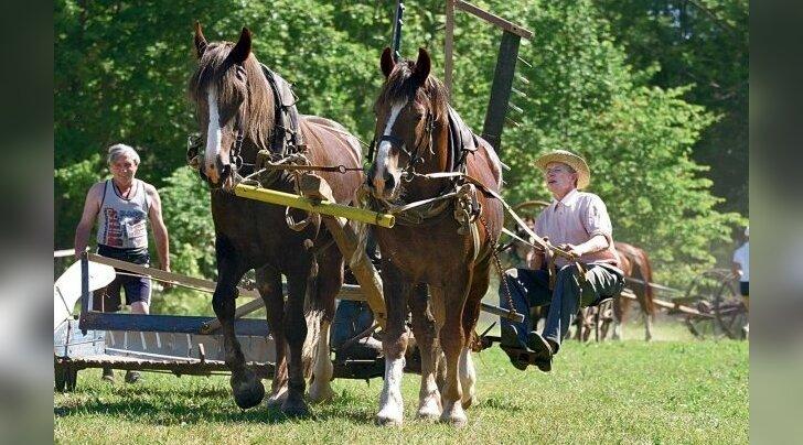 Igipõline vaidlus: kes on puhtatõuline tori hobune?