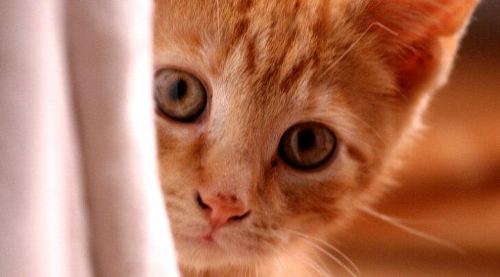 Lihtne õpetus, kuidas mõista oma kassi meeleolu ja kehakeelt