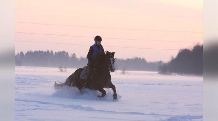 Eesti hobune— värviline nagu vikerkaar