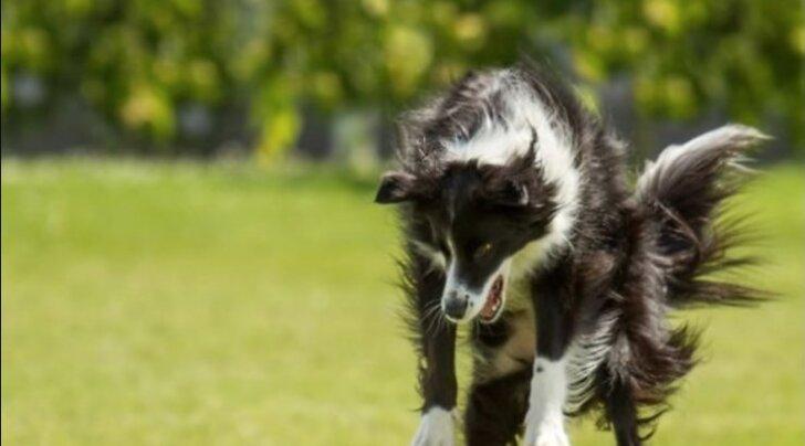 Humoorikas GALERII: Koerad, kes kardavad kõige kummalisemaid asju