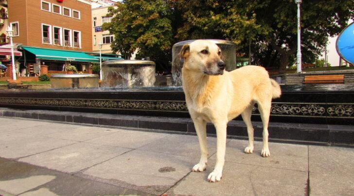 FOTOD: Istanbuli tänavate kassid ja koerad on lemmikloomadeks tuhandetele linlastele