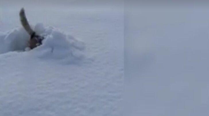 Lõbus VIDEO: Vaata, mis juhtub koertega siis, kui paks lumi järsku maha sajab
