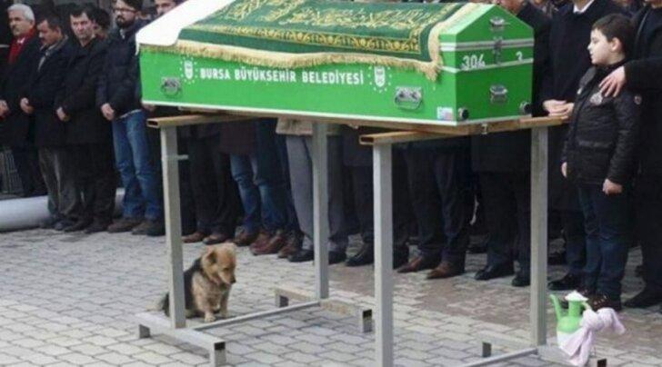 Nähtamatu side: murtud südamega koer tuleb iga päev tagasi oma parima sõbra hauale teda leinama
