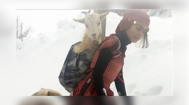 Internet kihab: väike tüdruk ja tema koer päästsid leidlikul viisil kitse ja tema vastsündinud talle