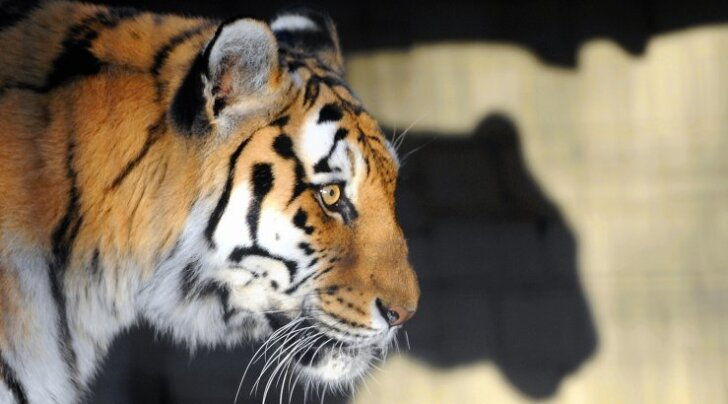 10 imelist looma, keda peab iga inimene oma elu ajal oma silmaga nägema