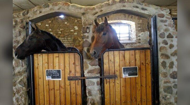 Aretuses kasutatavatelt hobustelt hakatakse senisest enam DNA-proove võtma