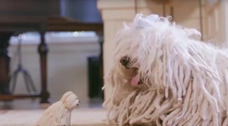 Vaata, millise omapärase mänguasja sai Mark Zuckerbergi koer oma kuuendaks sünnipäevaks