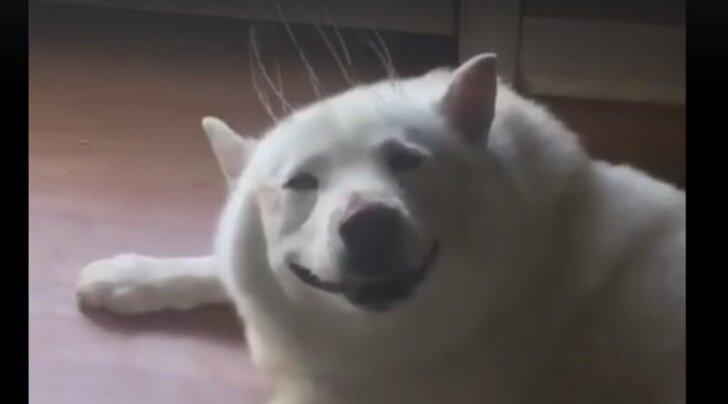Naljakas VIDEO: Väike peamassaaž? Vaata, milline näeb välja puhas õnn ja rõõm!