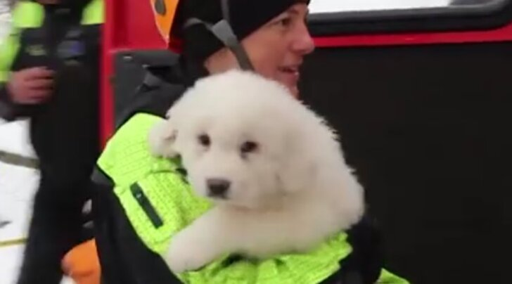 VIDEO: Itaalias lumelaviini alla jäänud hotellist päästeti armsad kutsikad