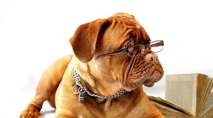 Sügisõhtust lugemist: 6 liigutavat raamatut koerasõpradele