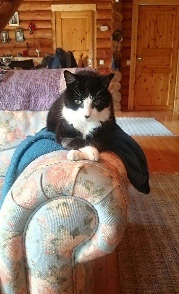 dd8bea08973 Naine ja tema kass — võimas side, mis on kestnud 15 aastat - Lemmikloom