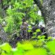 Neeruti maastikukaitsealal leidub kolm viuharuldust