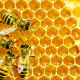 Praegu on Euroopas hinnanguliselt ligi 13,5 miljonit mesilasperet ehk ligikaudu seitse biljonit mesilast