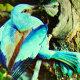 Ornitoloogid otsivad haruldast sinist lindu