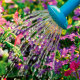 Kuidas aeda targalt kasta