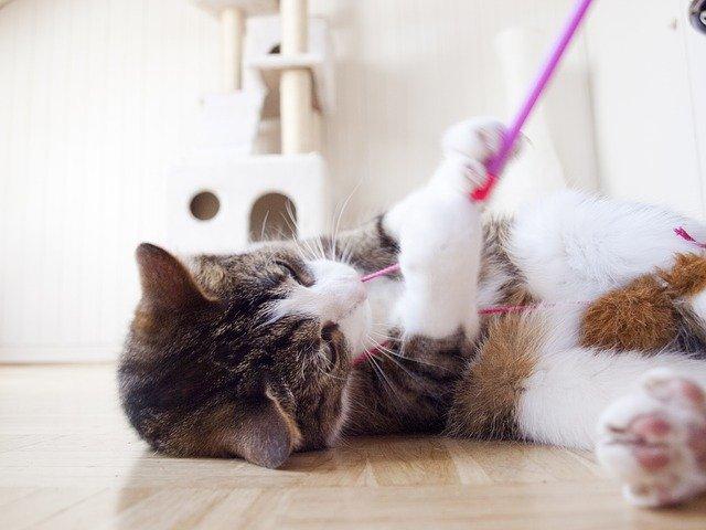 3b359579bb5 Millised mänguasjad sütitavad kassis jahikire? - Lemmikloom