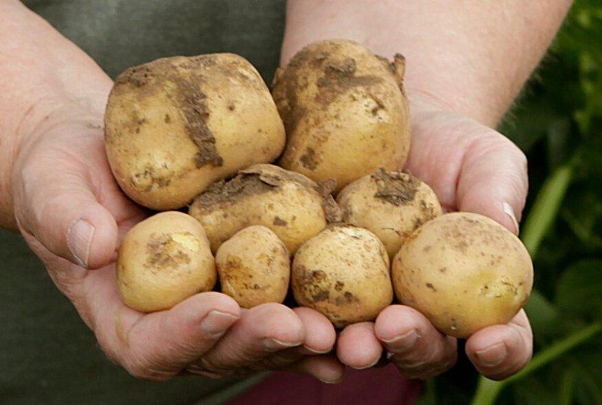 Viis imet, mida kartulist oodata ei oskaks