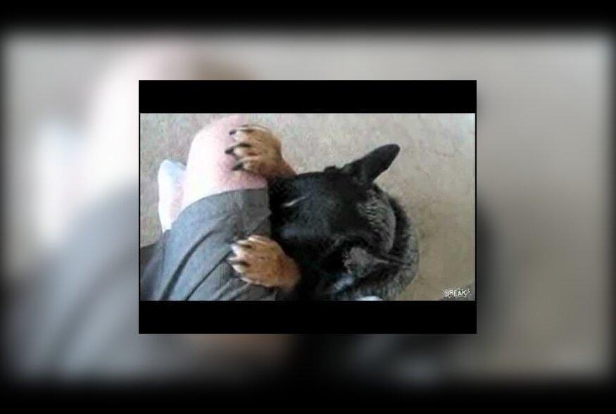 ВИДЕО: Хозяин приучил собаку молиться перед едой