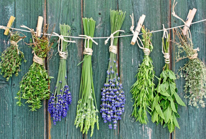 Ravimtaimede aastakalender: Milliseid taimi ja millal korjata?
