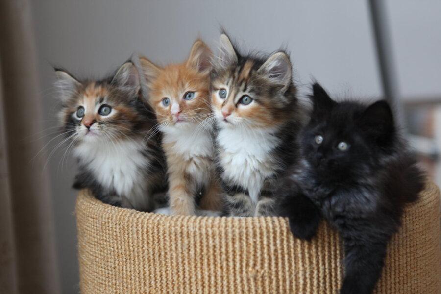 04bdf76c66c Nõuanded värskele kassiomanikule: kuidas kassipojale uut kodu tutvustada  ning viia ta kokku pere teiste loomadega