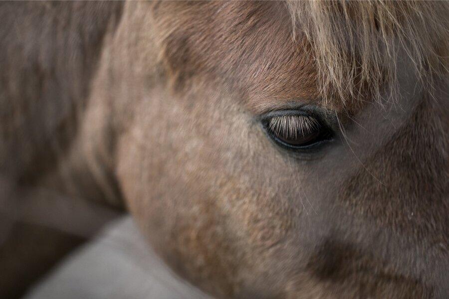 Российское отделение «Трансперенси Интернешнл» просит проверить стоимость подаренного Рамзану Кадырову коня