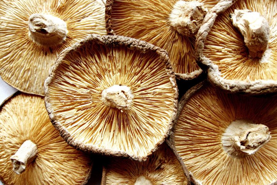 Mükoloog Veiko Kastanje: Minge metsa! Tänase seenesousti jagu seeni leiate sealt kindlasti