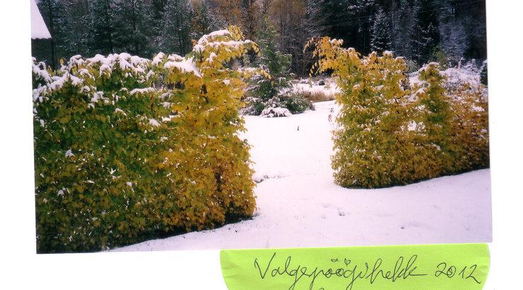 Milline on parim lehtpuuhekk talvel?
