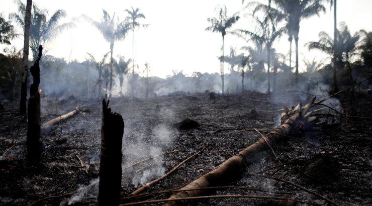Brasiilia Amazonase vihmametsades on avastatud rekordarv tulekahjusid