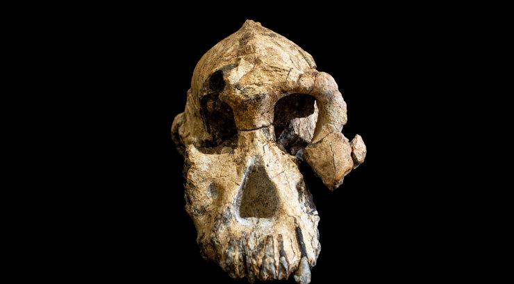 Rekordvana inimeellase kolju heidab evolutsiooniteooriale kinda