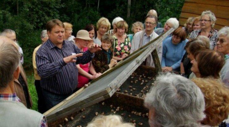 Lätis tekkis viinamäetigude kasvatamise buum, mis peagi läbi kukkus