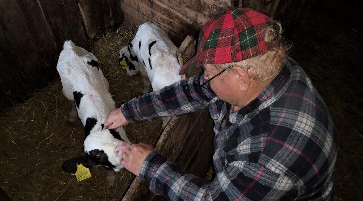 FOTO | Maalehe ilmatarga lehmal sündisid kaksikud vasikad