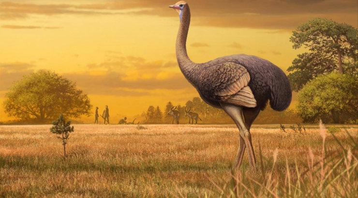 Ka Euroopas elasid suured linnud: avastati pooletonnise ürglinnu jäänused