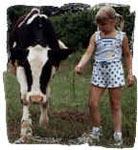 Oma lehma piim