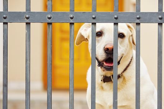 2bb57681147 Vastavalt koera tõule ja harjumustele ei pruugi piisata tavapärase  kõrgusega aiast. Kas teadsid, et aialippide paigutus on hea abinõu, millega  saad koera ...