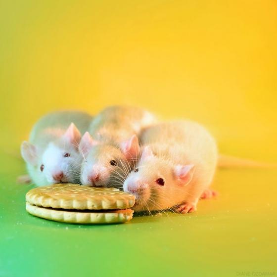 Pagello, Feirefiz ja Inoa naudivad hommikusööki.
