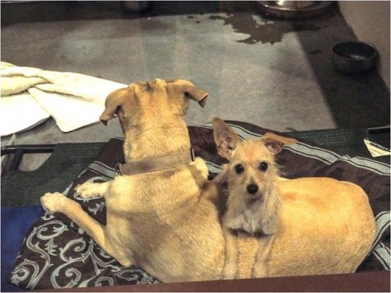 https://www.thedodo.com/close-to-home/dog-best-friends-adoption