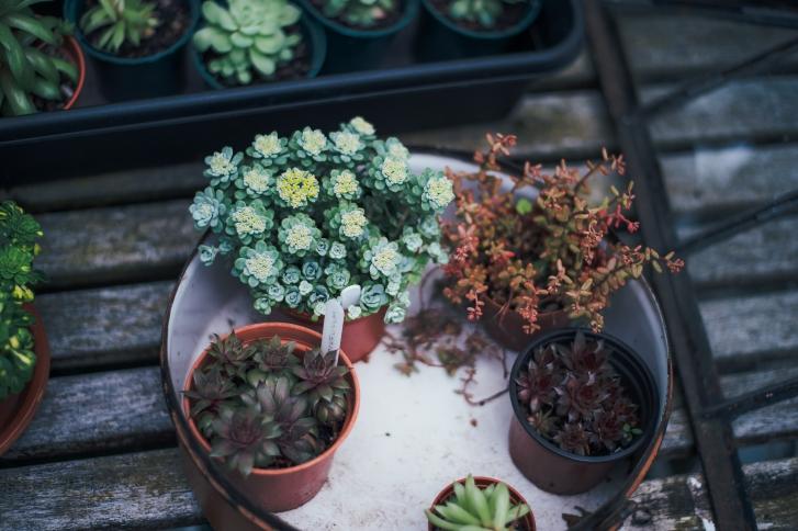 0967451a89a Lõika tagasi ülekasvanud taimed, et valguse jaotumine oleks parem. Kunagi  pole hilja taime ümber istutada, kui ta ei tunne end väikseseks jäänud  potis ...