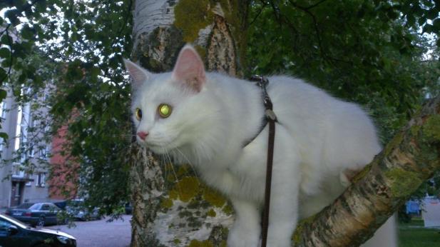 Kass Ada