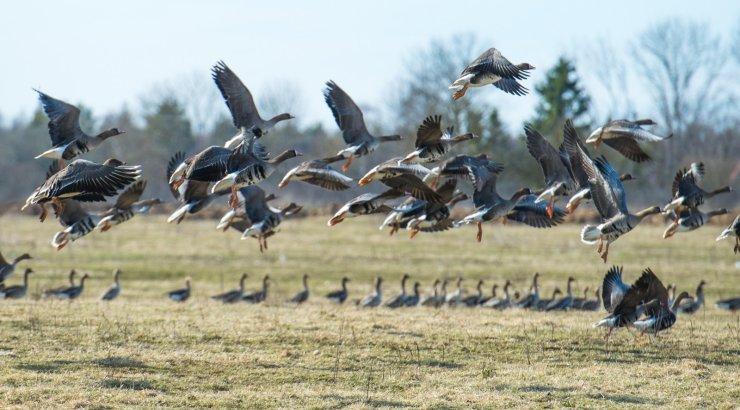 Kumari looduskaitsepreemia pälvis ornitoloog Aivar Leito: