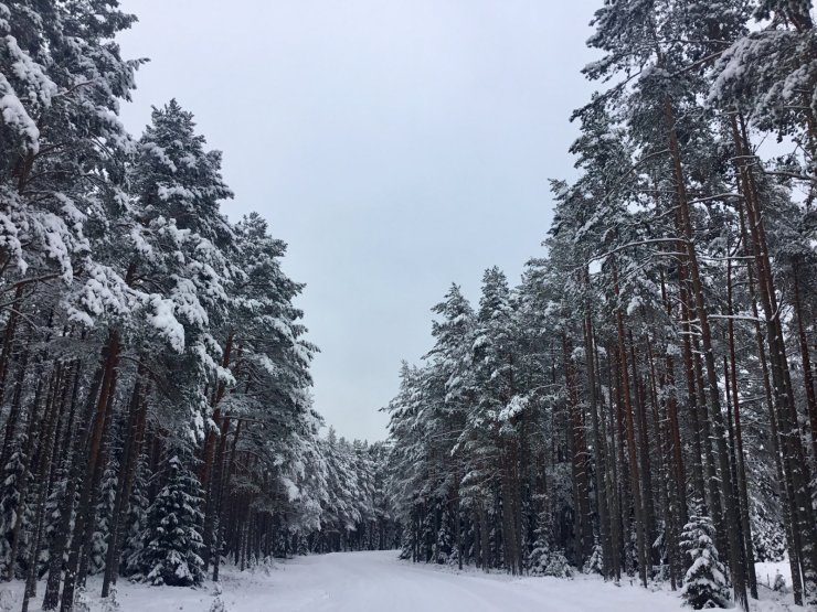FOTOD ja VIDEOD   Eestimaad kattev lumevaip on justkui pehme talvine tekk