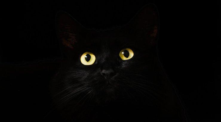Ebausu radadel: kuidas saab musta kassi nägemisest halb enne?