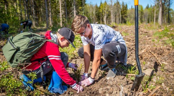 VIDEO ja FOTOD   RMK metsaistutuspäeval pandi maha üle 45 000 puu