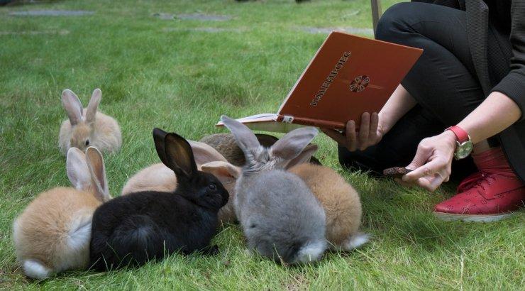 FOTOD | Sõmeru nunnud lugemisjänesed rõõmustavad vallamaja külalisi