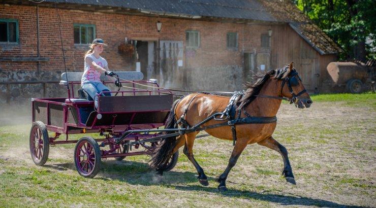 Tori hobune sai elujõudu juurde, uus hingamine on käes ka kasvanduses