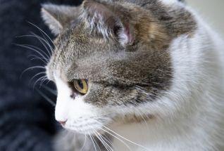 Kass Jossu
